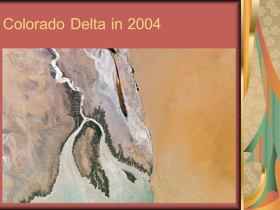 Colorado Delta in 2004