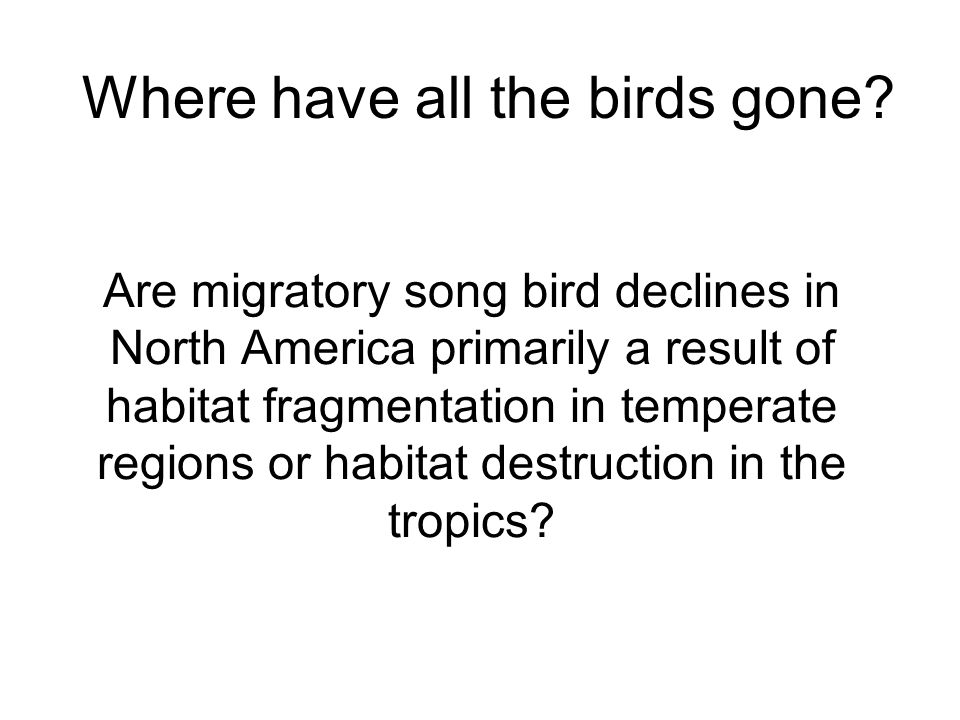 Are migratory song bird declines in North America primarily a result of habitat fragmentation in temperate regions or habitat destruction in the tropics.