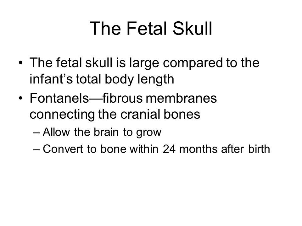The Fetal Skull The fetal skull is large compared to the infant's total body length Fontanels—fibrous membranes connecting the cranial bones –Allow the brain to grow –Convert to bone within 24 months after birth