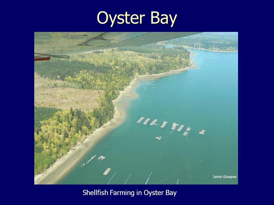 Oyster Bay Shellfish Farming in Oyster Bay Jamie Glasgow