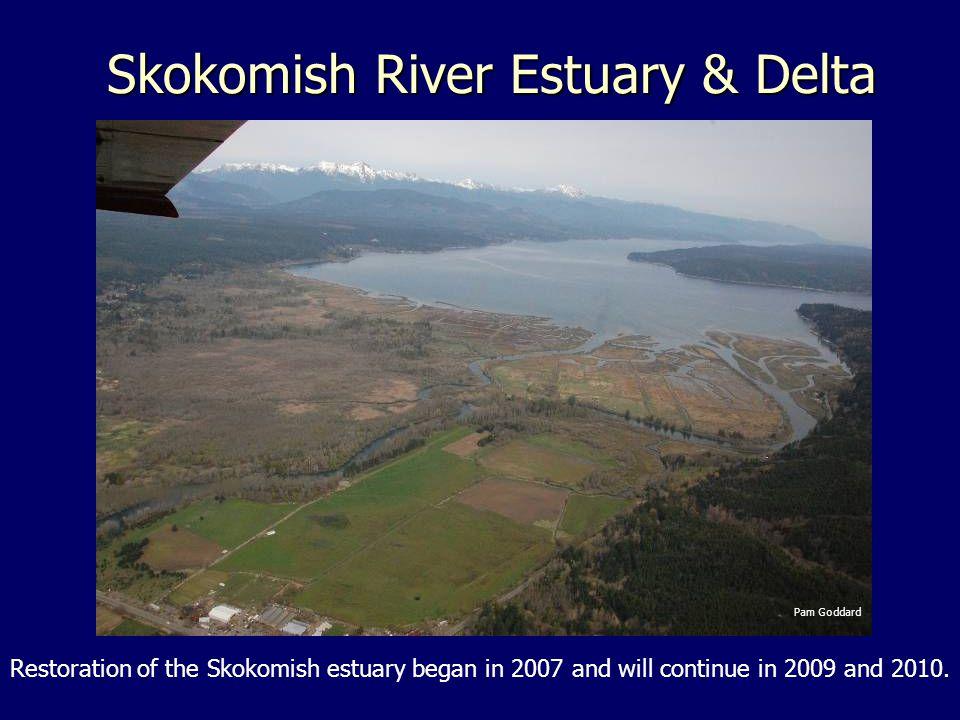 Skokomish River Estuary & Delta Pam Goddard Restoration of the Skokomish estuary began in 2007 and will continue in 2009 and 2010.