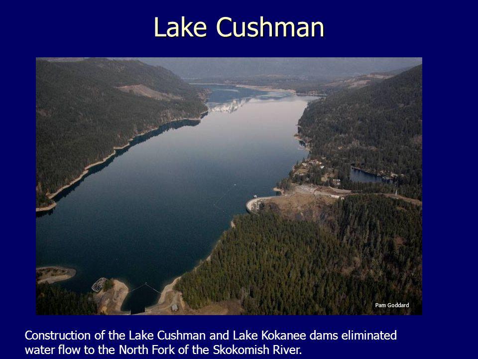 Lake Cushman Pam Goddard Construction of the Lake Cushman and Lake Kokanee dams eliminated water flow to the North Fork of the Skokomish River.