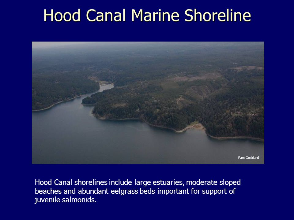 Hood Canal Marine Shoreline Hood Canal shorelines include large estuaries, moderate sloped beaches and abundant eelgrass beds important for support of juvenile salmonids.
