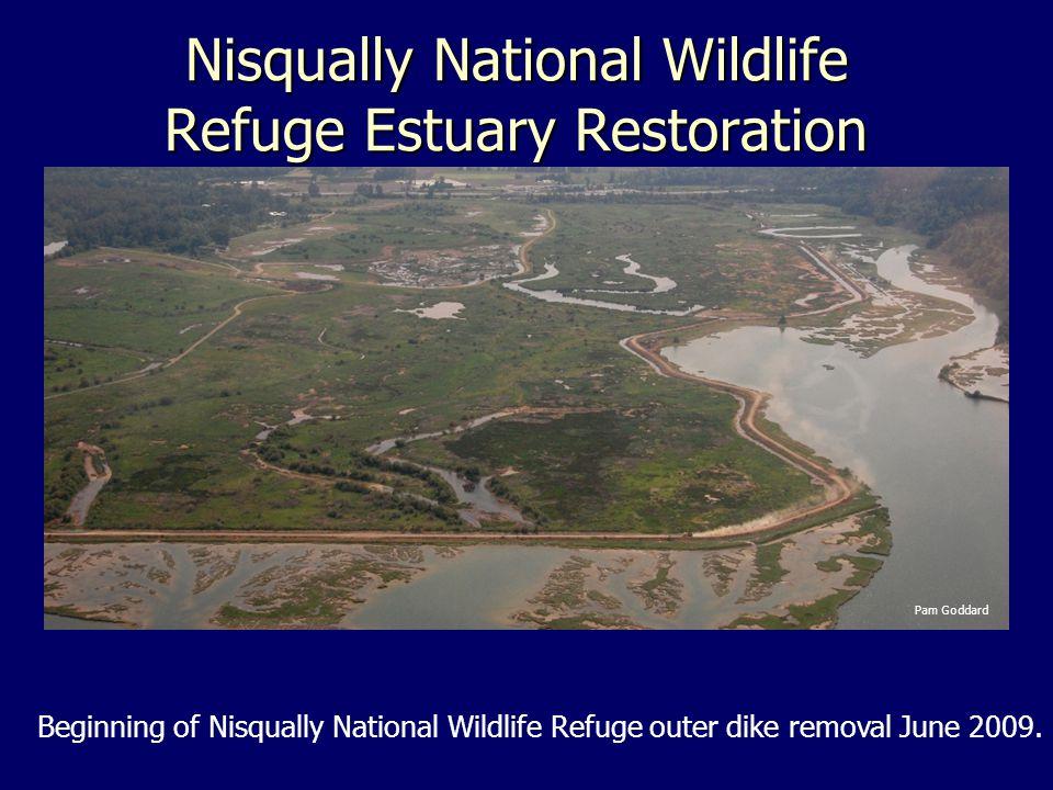 Nisqually National Wildlife Refuge Estuary Restoration Beginning of Nisqually National Wildlife Refuge outer dike removal June 2009.