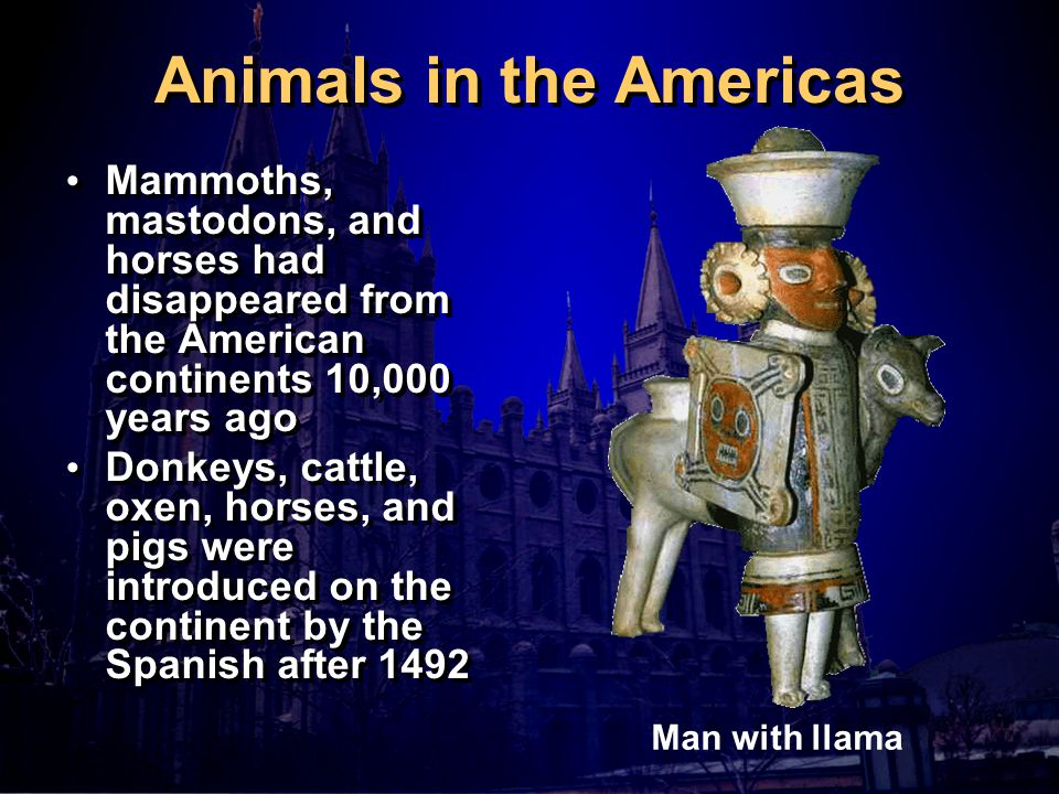 Animals in the Americas Mammoths, mastodons, and horses had disappeared from the American continents 10,000 years ago Donkeys, cattle, oxen, horses, and pigs were introduced on the continent by the Spanish after 1492 Mammoths, mastodons, and horses had disappeared from the American continents 10,000 years ago Donkeys, cattle, oxen, horses, and pigs were introduced on the continent by the Spanish after 1492 Man with llama