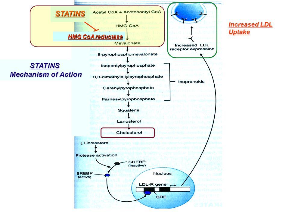 STATINS Increased LDL Uptake STATINS Mechanism of Action Mechanism of Action HMG CoA reductase