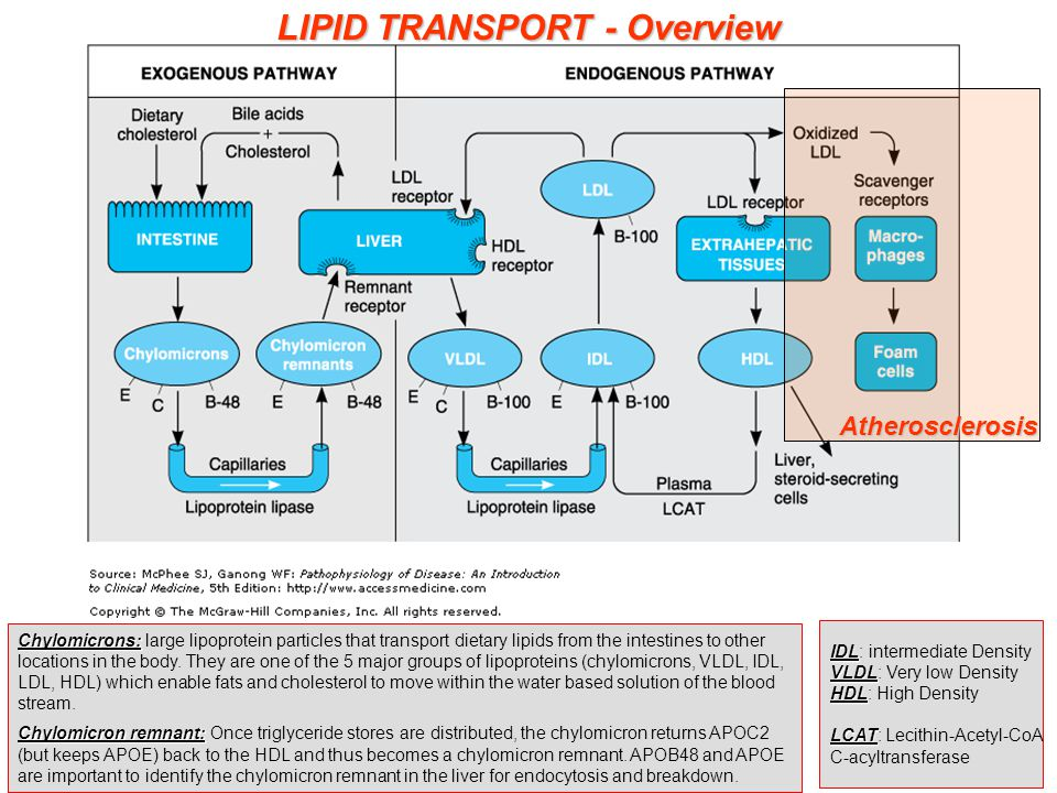 Modes to reduce lipid levels Modes to reduce lipid levels: 1.
