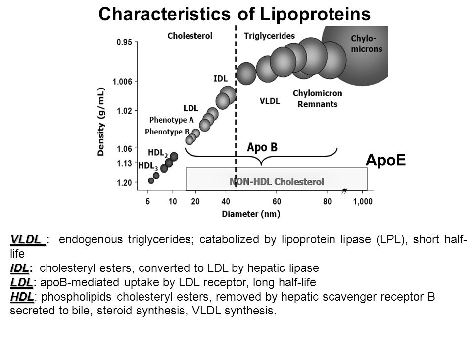 Cholestyramine and Colestipol and Colesevelam Lipid Lowering Drugs: Anion-Exchange Resins Sequester bile acids (BA) in the gut hence blocking enterohepatic cycling of BA Usually used in combination with a statin Major side effects – bitter taste, nausea constipation Important interactions – bind polar drugs such as warfarin, digoxin, thyroxine and statins: give 1 hr before resin