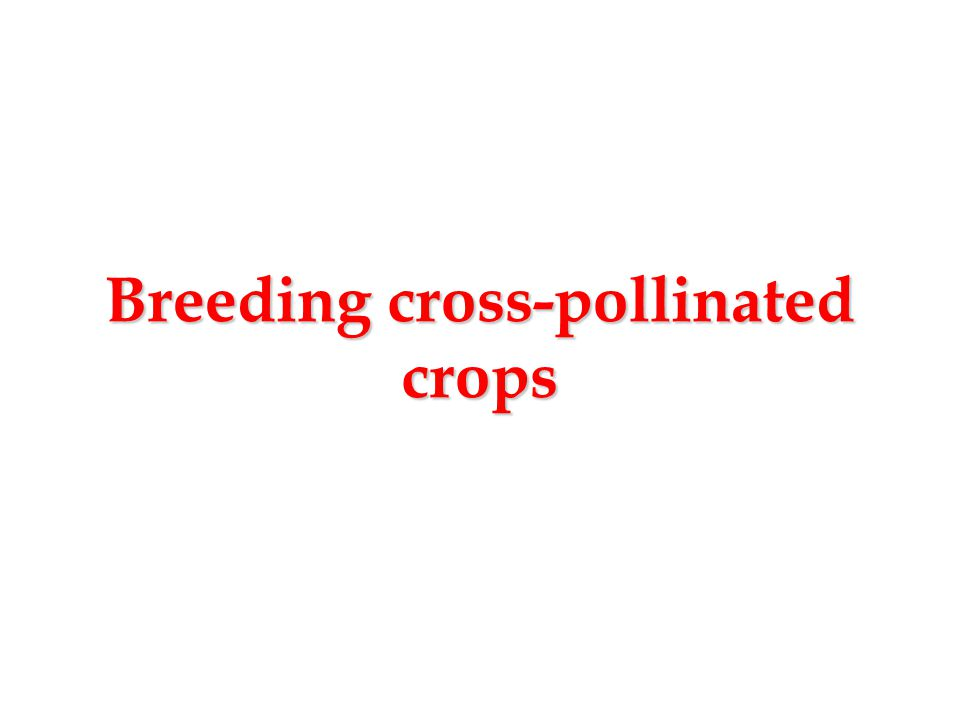 Cultivar Development in Cross-pollinated Species  Compared to self-pollinated species, cross- pollinated species differ in their gene pool structure, and in the extent of genetic recombination  Unselected populations typically consist of a heterogeneous mixture of heterozygotes; as a result of outcrossing, genes are re-shuffled in every generation