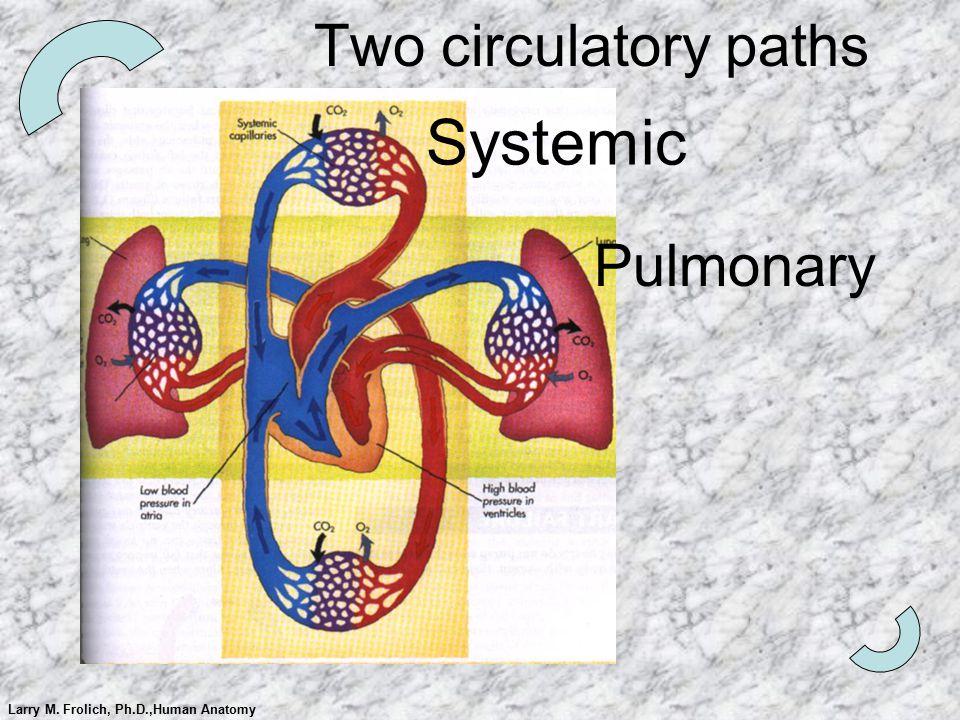 Larry M. Frolich, Ph.D.,Human Anatomy Two circulatory paths Pulmonary Systemic
