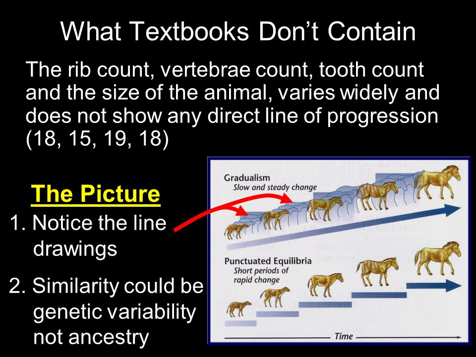 What Textbooks Don't Contain The rib count, vertebrae count, tooth count and the size of the animal, varies widely and does not show any direct line of progression (18, 15, 19, 18) 1.