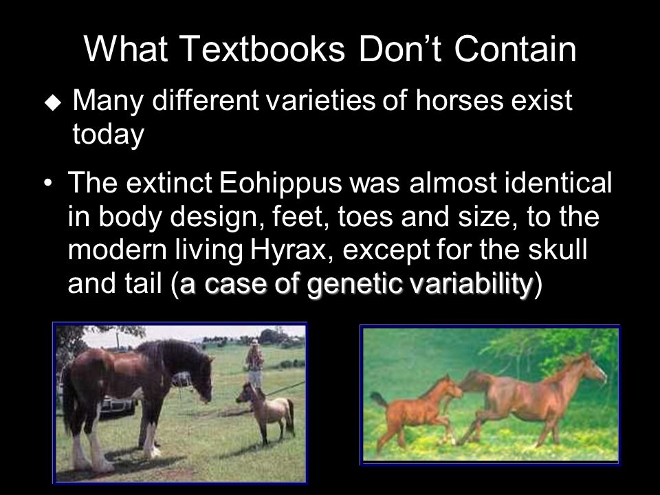 What Textbooks Don't Contain a case of genetic variabilityThe extinct Eohippus was almost identical in body design, feet, toes and size, to the modern living Hyrax, except for the skull and tail (a case of genetic variability)  Many different varieties of horses exist today