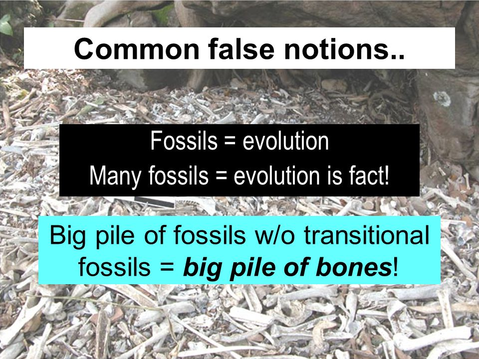 Common false notions..Fossils = evolution Many fossils = evolution is fact.