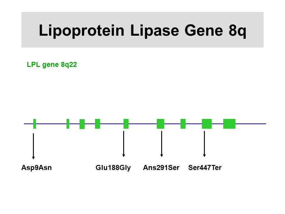 Lipoprotein Lipase Gene 8q LPL gene 8q22 Asp9AsnGlu188GlyAns291SerSer447Ter