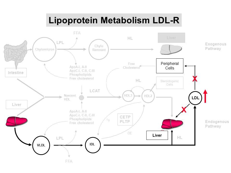 Intestine Liver Lipoprotein Metabolism LDL-R Endogenous Pathway FFA VLDL ApoA-I, A-II ApoC-I, C-II, C-III Phospholipids Free cholesterol ApoA-I, A-II