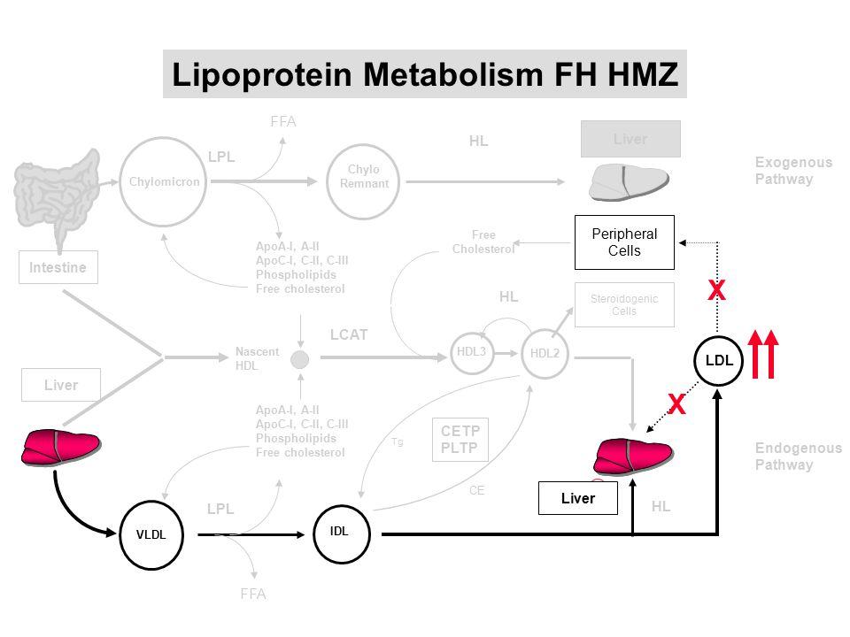 Intestine Liver Lipoprotein Metabolism FH HMZ Endogenous Pathway FFA VLDL ApoA-I, A-II ApoC-I, C-II, C-III Phospholipids Free cholesterol ApoA-I, A-II