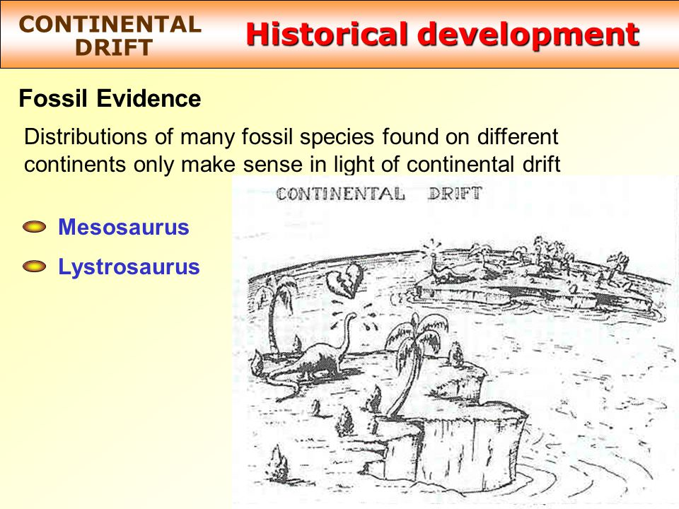 Historical development CONTINENTAL DRIFT Fossil Evidence Distributions of many fossil species found on different continents only make sense in light of continental drift Mesosaurus Lystrosaurus How can the same species evolve on widely separated continents