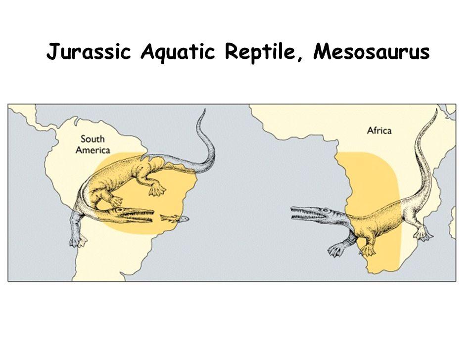 Jurassic Aquatic Reptile, Mesosaurus