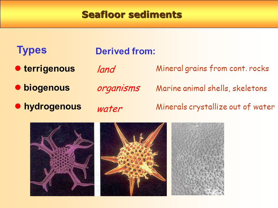 Seafloor sediments terrigenous biogenous l hydrogenous Types Derived from: land Mineral grains from cont.