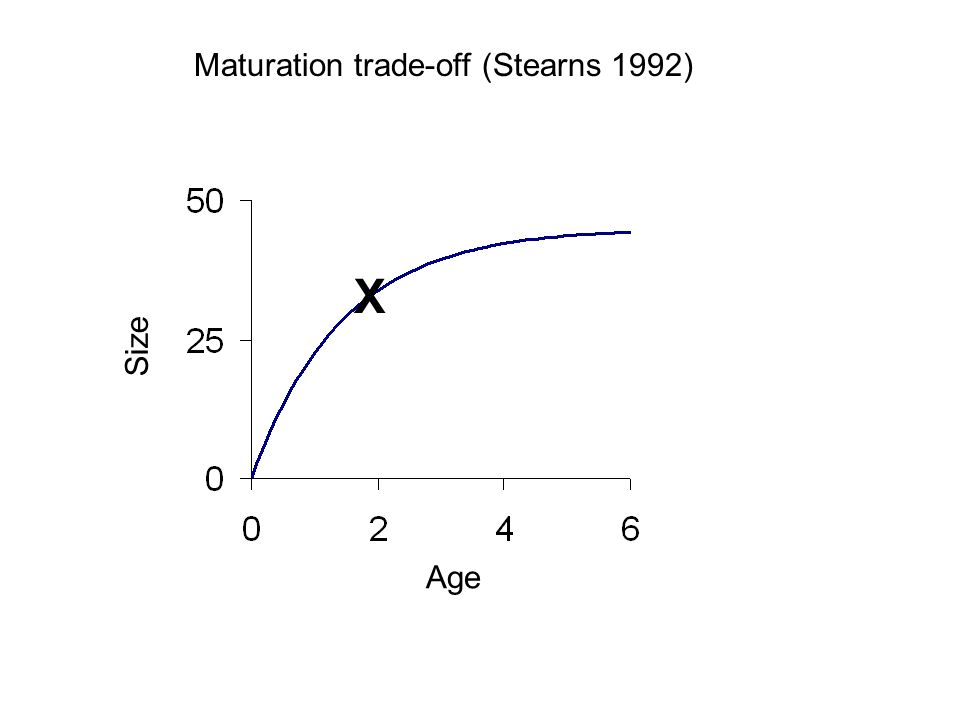 Maturation trade-off (Stearns 1992) Age Size X