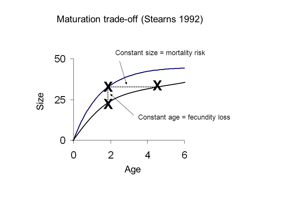 Maturation trade-off (Stearns 1992) Age Size X Constant size = mortality risk Constant age = fecundity loss X X