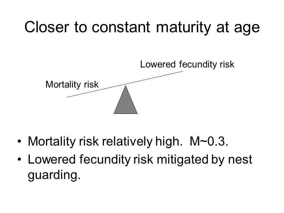 Closer to constant maturity at age Mortality risk relatively high. M~0.3. Lowered fecundity risk mitigated by nest guarding. Mortality risk Lowered fe