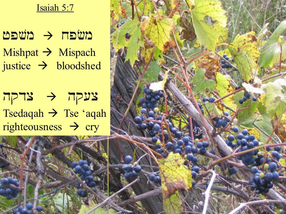 Isaiah 5:7 jpvm  xpfm Mishpat  Mispach justice  bloodshed hqdc  hq[c Tsedaqah  Tse 'aqah righteousness  cry