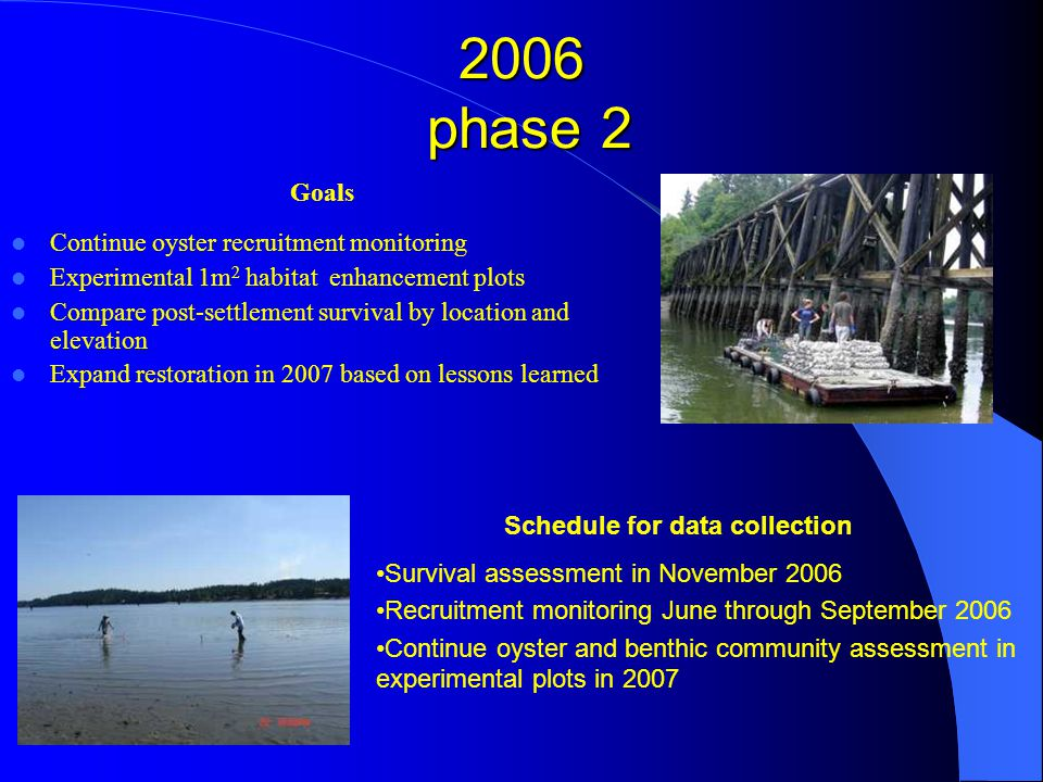 2006 phase 2 Goals Continue oyster recruitment monitoring Experimental 1m 2 habitat enhancement plots Compare post-settlement survival by location and elevation Expand restoration in 2007 based on lessons learned Schedule for data collection Survival assessment in November 2006 Recruitment monitoring June through September 2006 Continue oyster and benthic community assessment in experimental plots in 2007