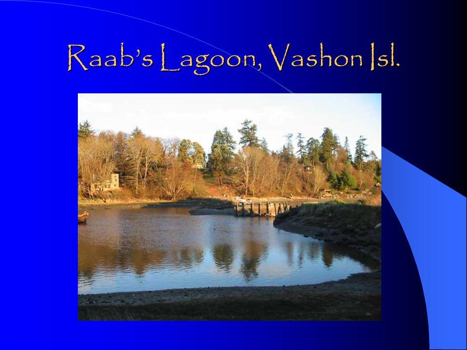 Raab's Lagoon, Vashon Isl.