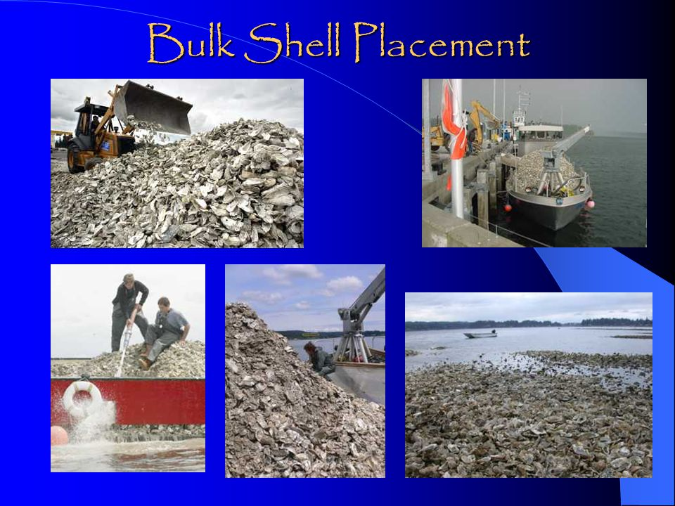 Bulk Shell Placement