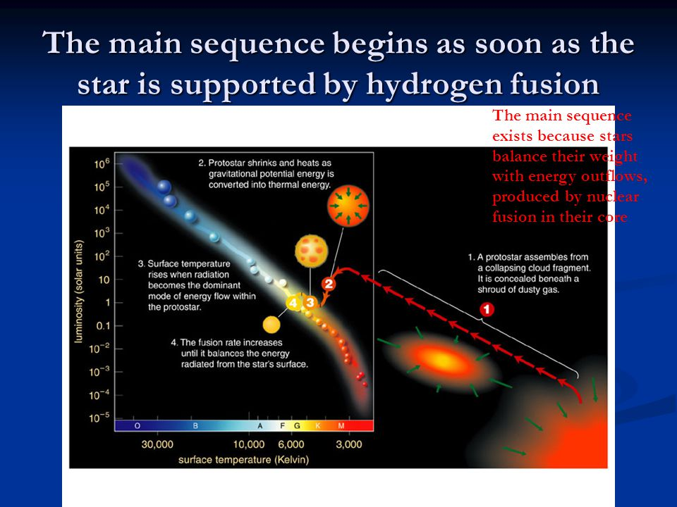 The main sequence begins as soon as the star is supported by hydrogen fusion The main sequence exists because stars balance their weight with energy o