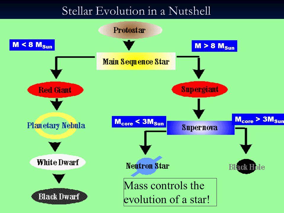 Stellar Evolution in a Nutshell Mass controls the evolution of a star! M < 8 M Sun M > 8 M Sun M core < 3M Sun M core > 3M Sun