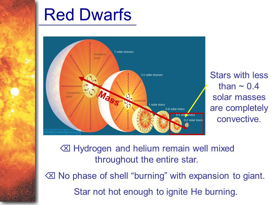 Red Dwarfs Stars with less than ~ 0.4 solar masses are completely convective.  Hydrogen and helium remain well mixed throughout the entire star.  No