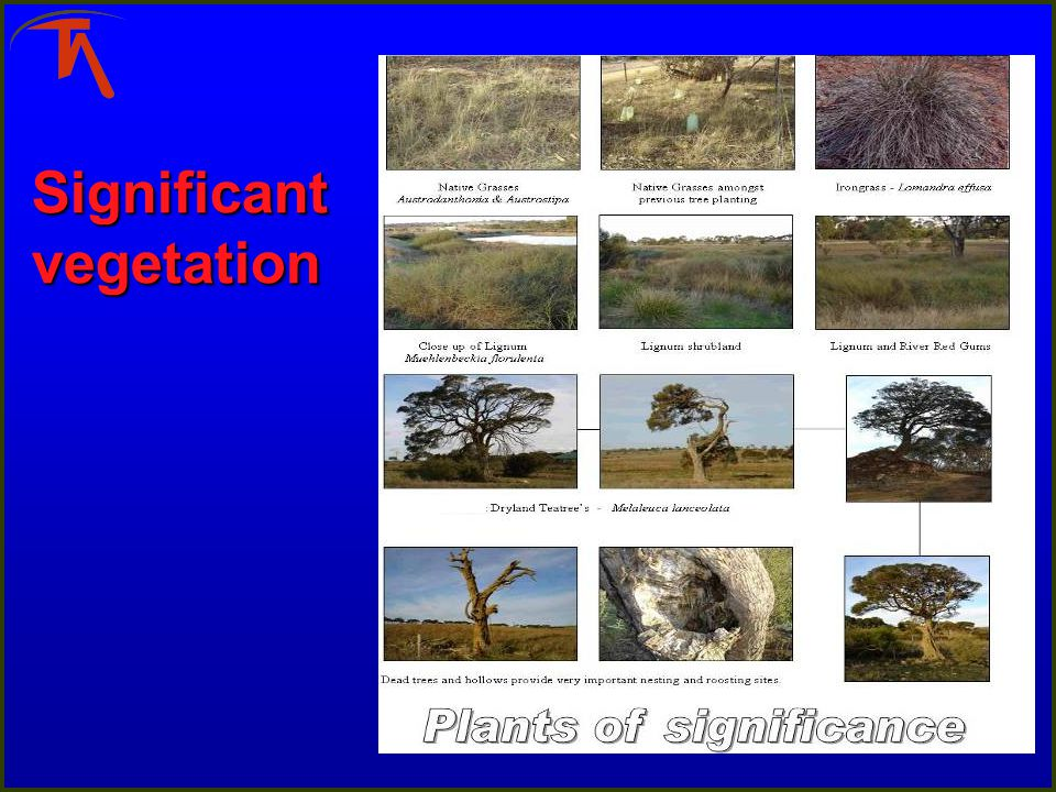 Significant vegetation
