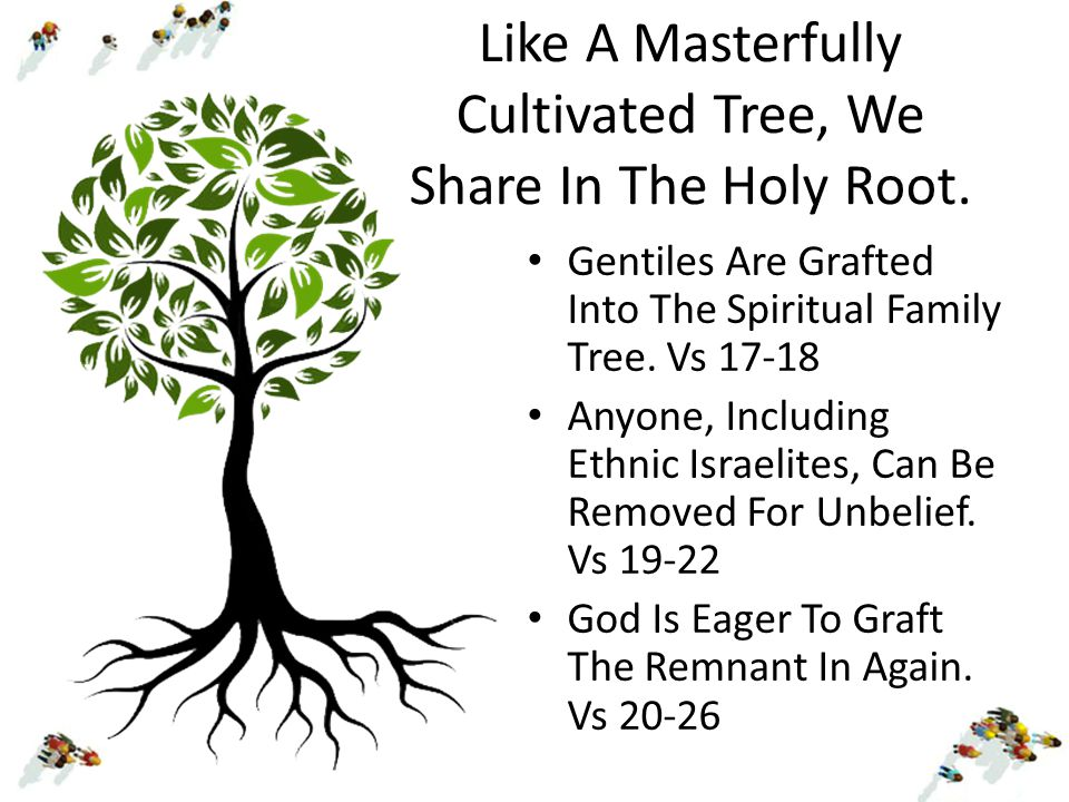 Like A Masterfully Cultivated Tree, We Share In The Holy Root. Gentiles Are Grafted Into The Spiritual Family Tree. Vs 17-18 Anyone, Including Ethnic