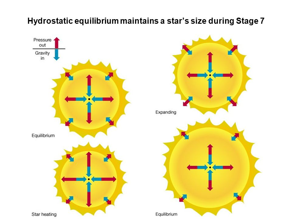 Hydrostatic equilibrium maintains a star's size during Stage 7