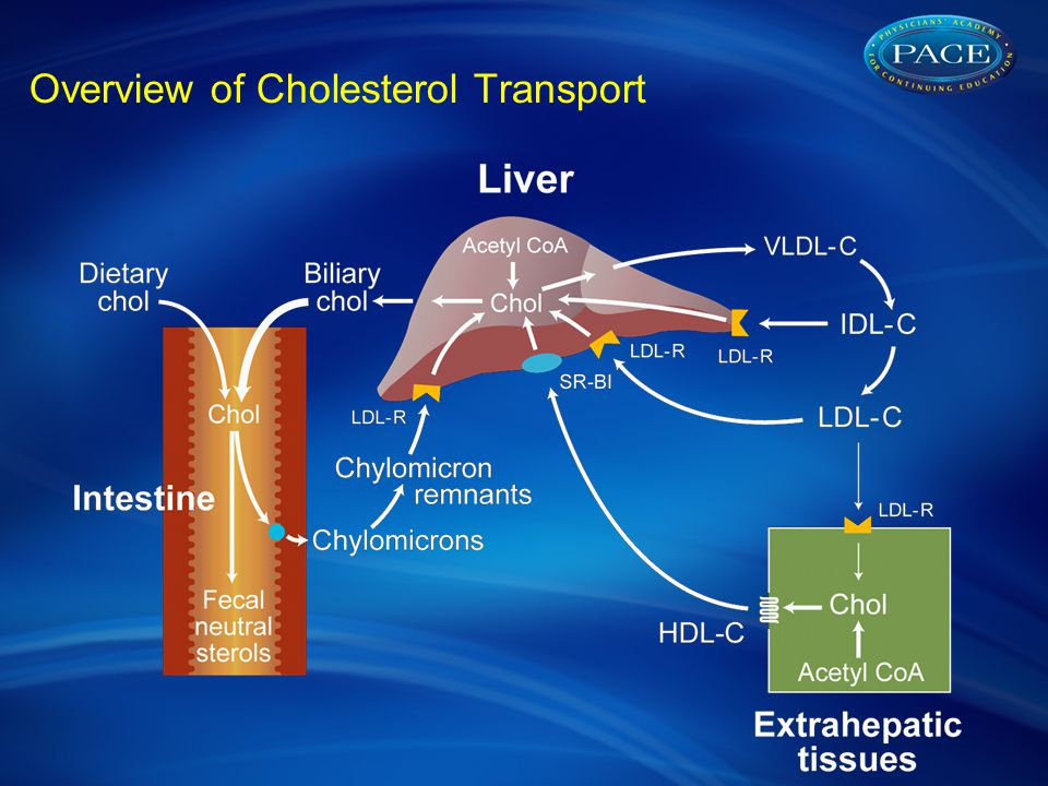 Overview of Cholesterol Transport