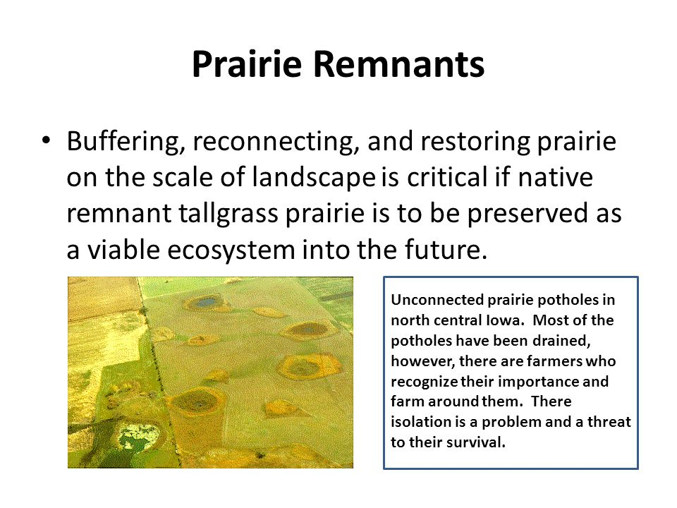 Prairie Remnants Buffering, reconnecting, and restoring prairie on the scale of landscape is critical if native remnant tallgrass prairie is to be preserved as a viable ecosystem into the future.