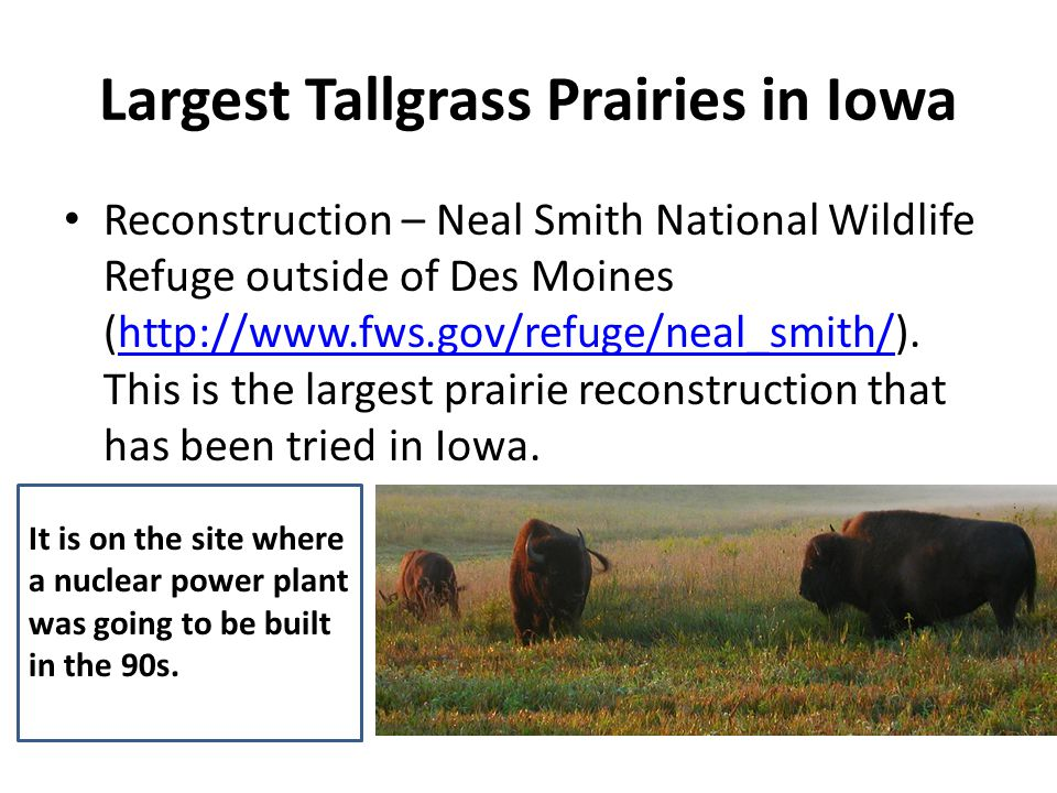 Largest Tallgrass Prairies in Iowa Reconstruction – Neal Smith National Wildlife Refuge outside of Des Moines (http://www.fws.gov/refuge/neal_smith/).