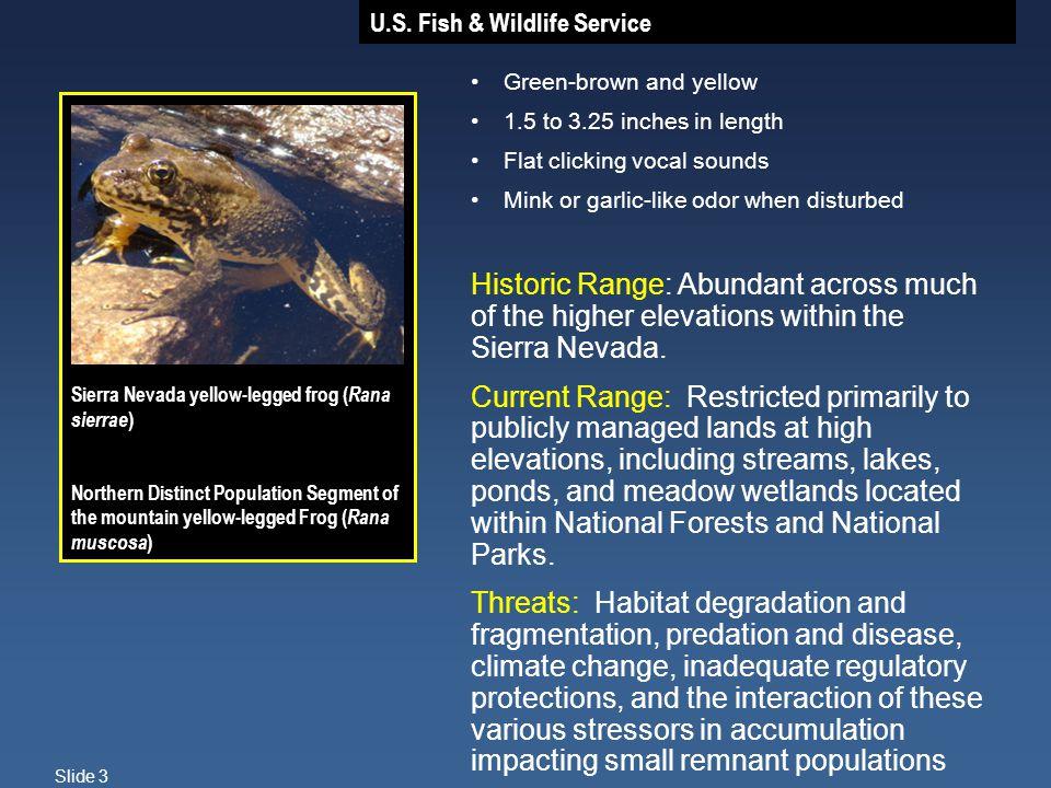 U.S. Fish & Wildlife Service Slide 3 Sierra Nevada yellow-legged frog ( Rana sierrae ) Northern Distinct Population Segment of the mountain yellow-leg