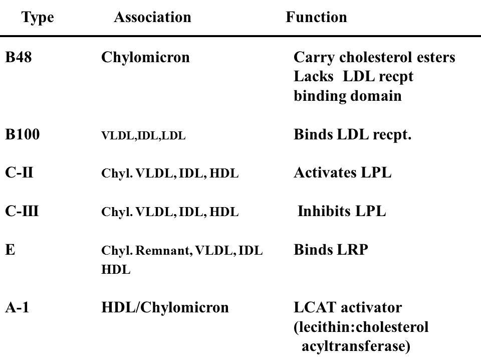 B48Chylomicron Carry cholesterol esters Lacks LDL recpt binding domain B100 VLDL,IDL,LDL Binds LDL recpt. C-II Chyl. VLDL, IDL, HDL Activates LPL C-II