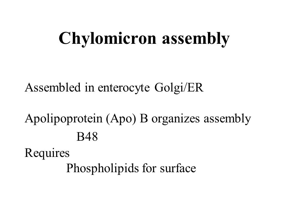 Chylomicron assembly Assembled in enterocyte Golgi/ER Apolipoprotein (Apo) B organizes assembly B48 Requires Phospholipids for surface