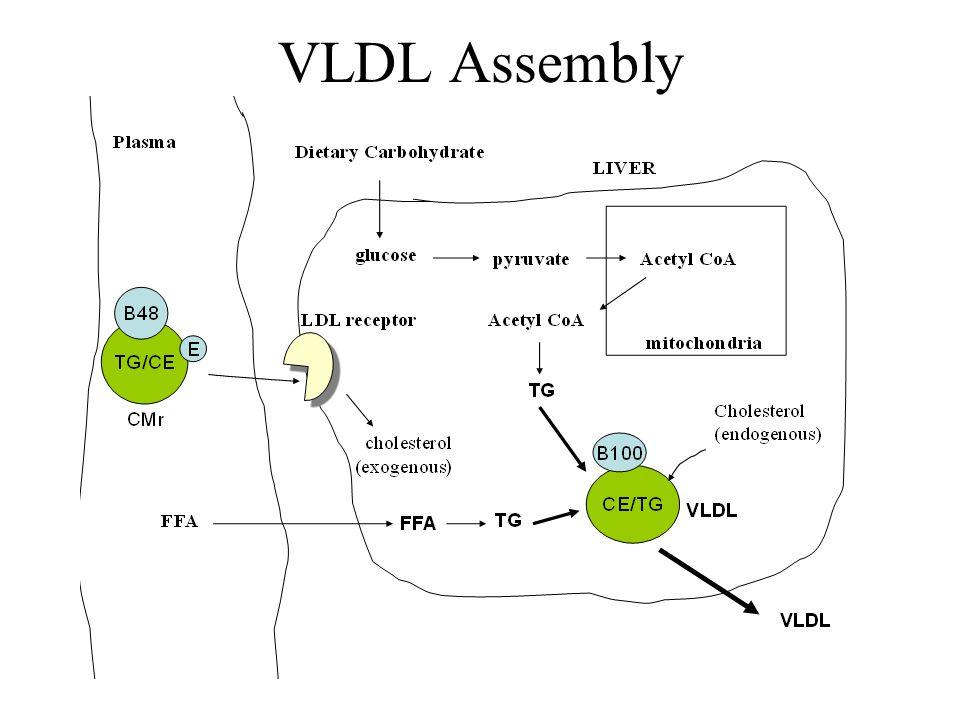 VLDL Assembly
