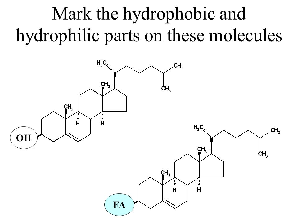 Mark the hydrophobic and hydrophilic parts on these molecules FA OH