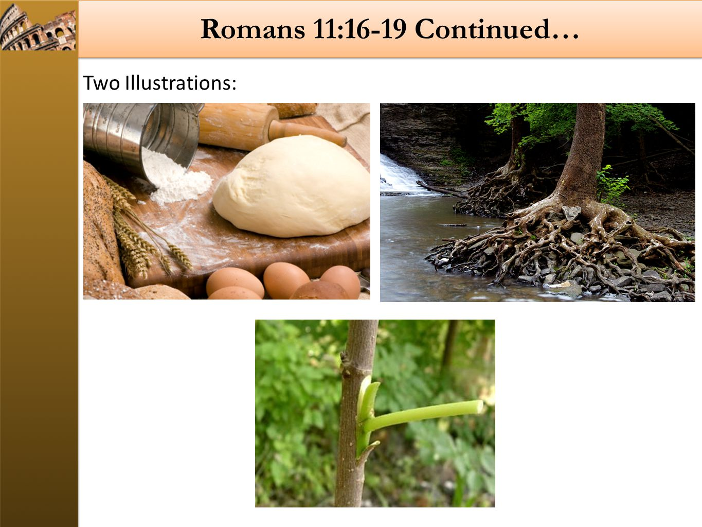 Romans 11:16-19 Continued… Two Illustrations: