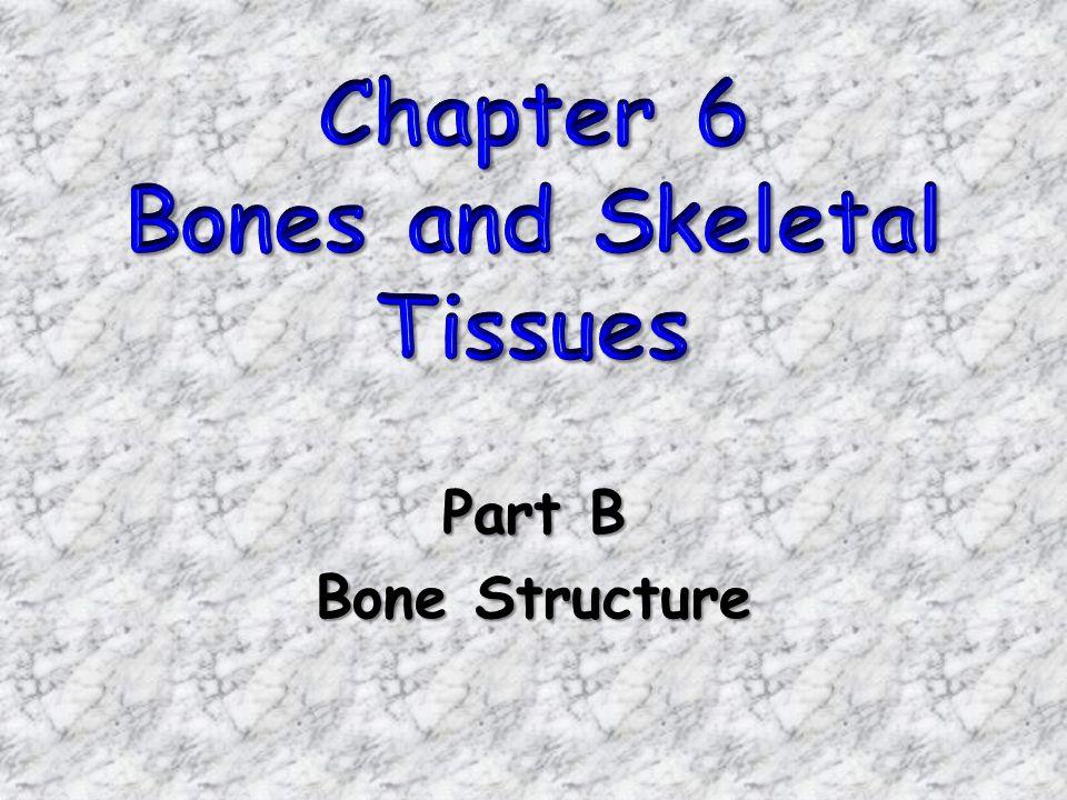 Part B Bone Structure