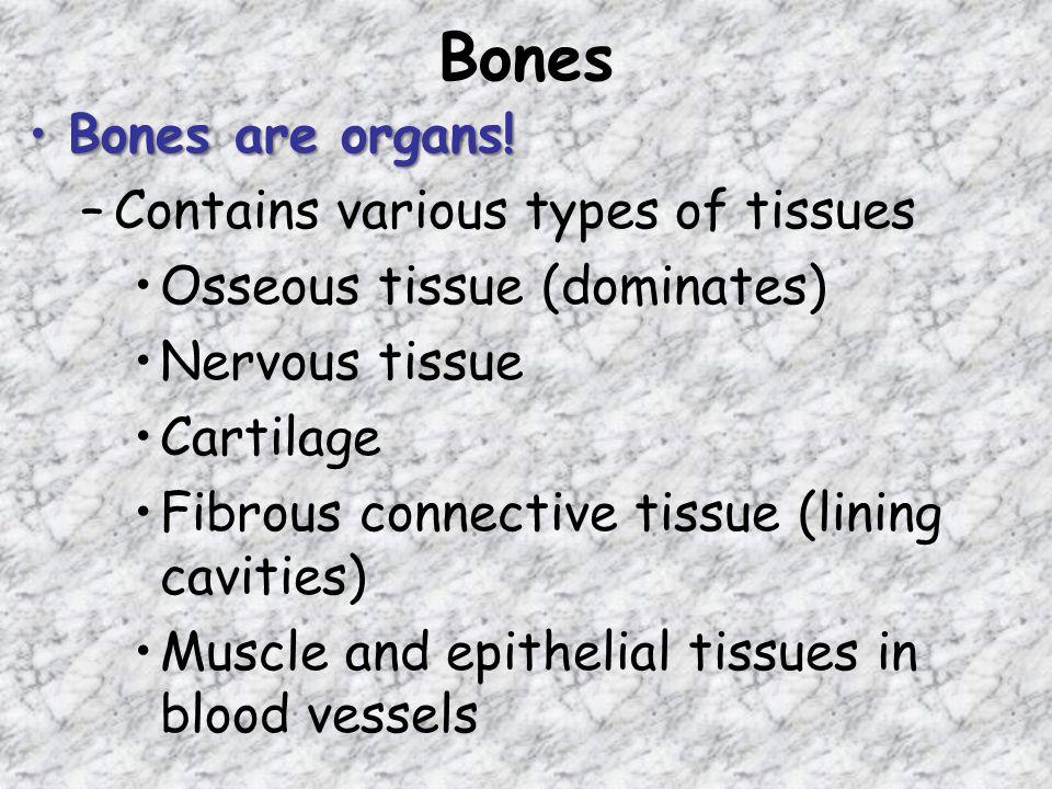 Bones Bones are organs!Bones are organs.
