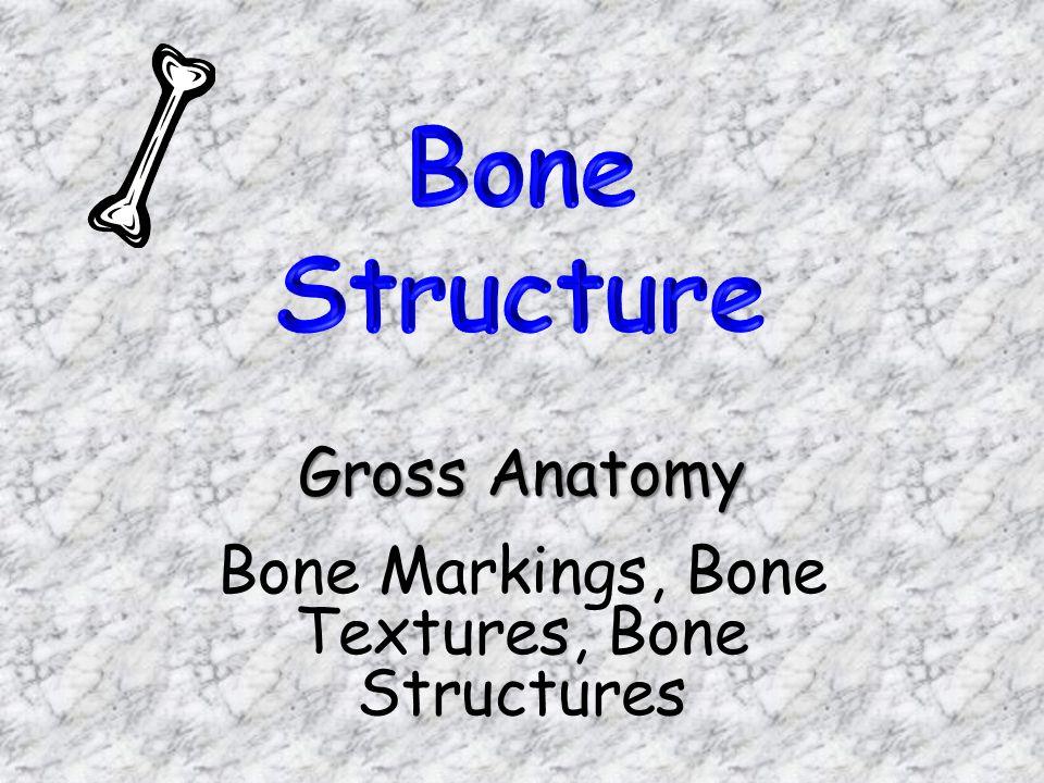 Gross Anatomy Bone Markings, Bone Textures, Bone Structures