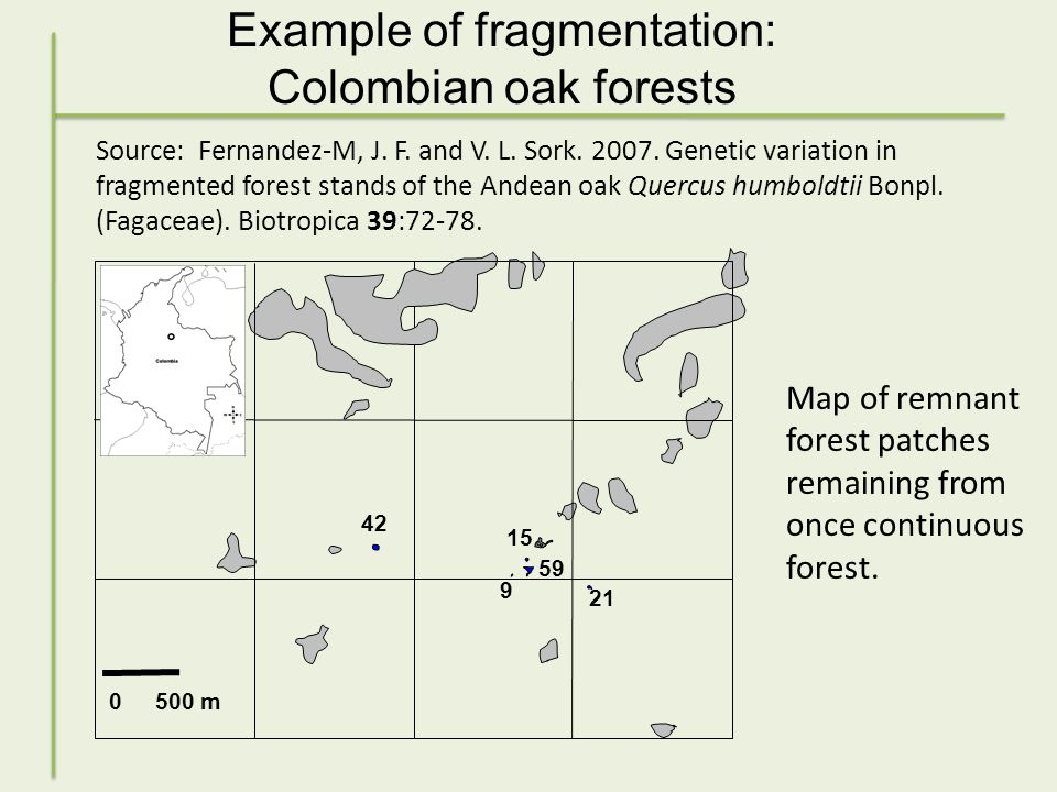 Example of fragmentation: Colombian oak forests 0 500 m 59 42 15 9 21 Source: Fernandez-M, J.