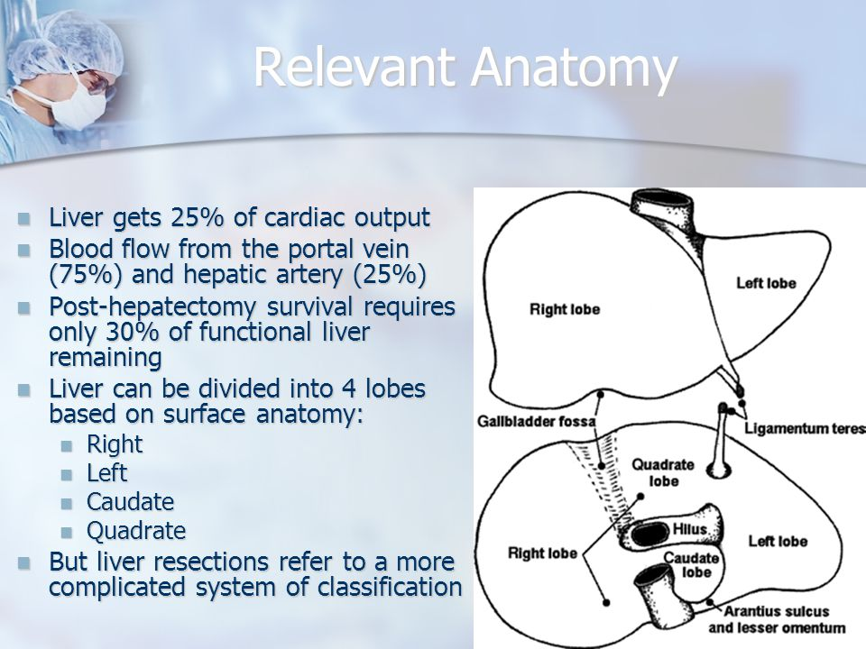 Relevant Anatomy Liver gets 25% of cardiac output Liver gets 25% of cardiac output Blood flow from the portal vein (75%) and hepatic artery (25%) Blood flow from the portal vein (75%) and hepatic artery (25%) Post-hepatectomy survival requires only 30% of functional liver remaining Post-hepatectomy survival requires only 30% of functional liver remaining Liver can be divided into 4 lobes based on surface anatomy: Liver can be divided into 4 lobes based on surface anatomy: Right Right Left Left Caudate Caudate Quadrate Quadrate But liver resections refer to a more complicated system of classification But liver resections refer to a more complicated system of classification